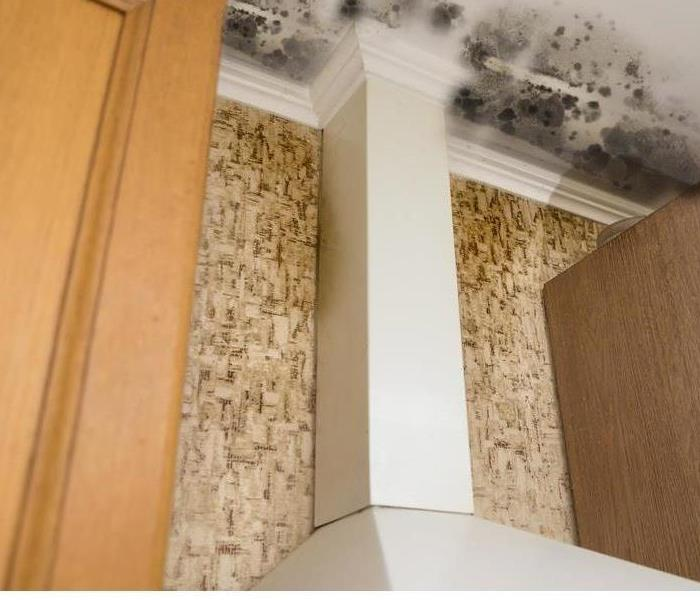 Mold Remediation 3 Reasons Your Ceiling Tiles Are Discolored